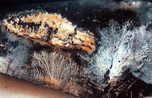 Schimmels aan de onderzijde van een bitumenbaan